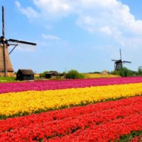 групажи за Холандия